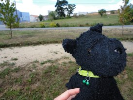 My awesome dog, Andy, who has travelled with me around the globe. He's a true friend.