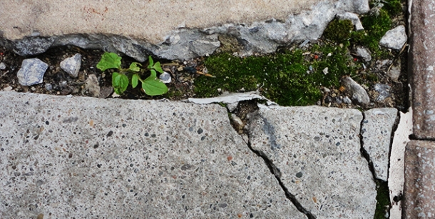 Like this mossy crack, and the plant springing forth.