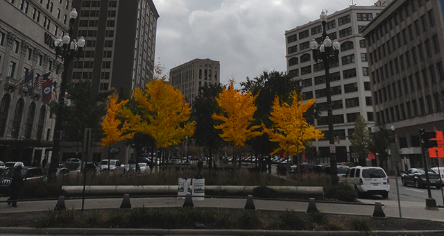 I appreciated the audacity of these yellow trees in the grey afternoon of the city.