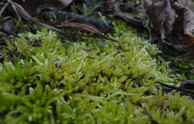Moss always reminds me of fairies. I loves it.