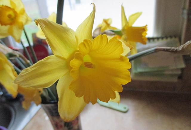 Daffodil in mom's Polish vase.