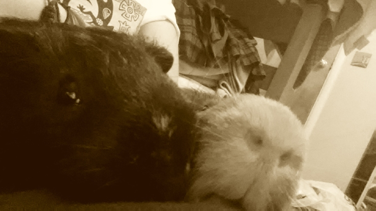Pig!EE! Nose!Zez!