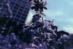 City-streets lavendar