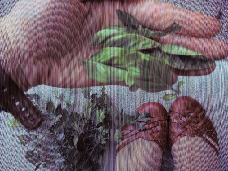 Leaves of basil, stalks of parsley, and my cute, cute red shoes. (They're not as comfortable as they are cute, though).