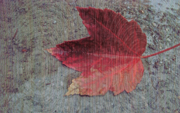 """leaf in a puddle"""