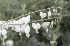 Small winter poem 6   She of thegarden-heart